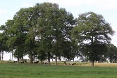 200613MaldegemKleit71