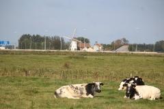 200927-Hoeke10
