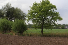 200501BuitenDeWereld7
